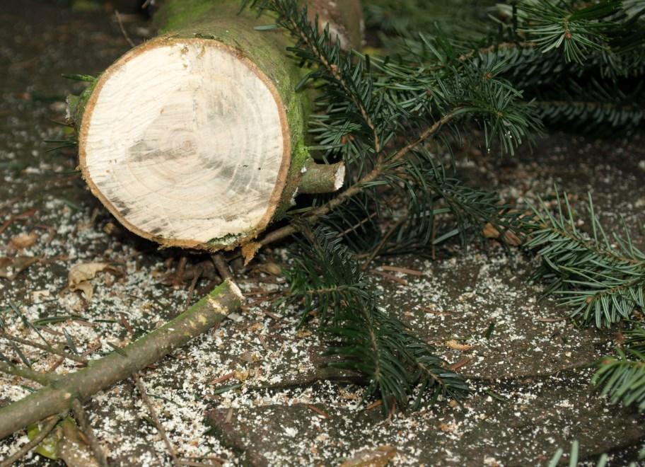 Weihnachtsbaum Selber Schlagen Sauerland.Christbaum Map Erleichtert Weihnachtsbaumkauf Agrar Presseportal De